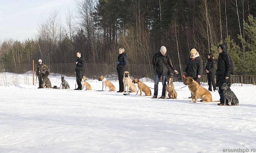 Дарт на сдаче испытания Управляемая Городская Собака в школе Гаевского